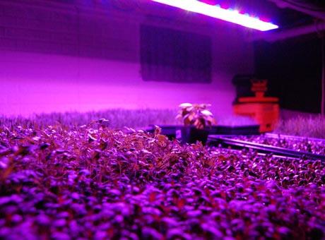 luz Plantas