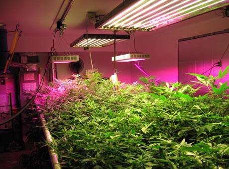 Plantas de Luz